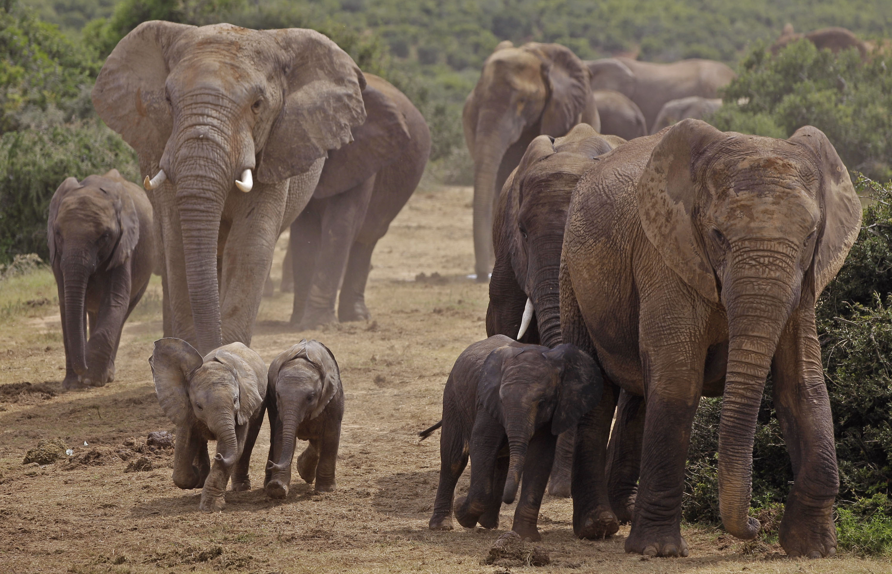 is africa a jungle full of elephants and lions all about america