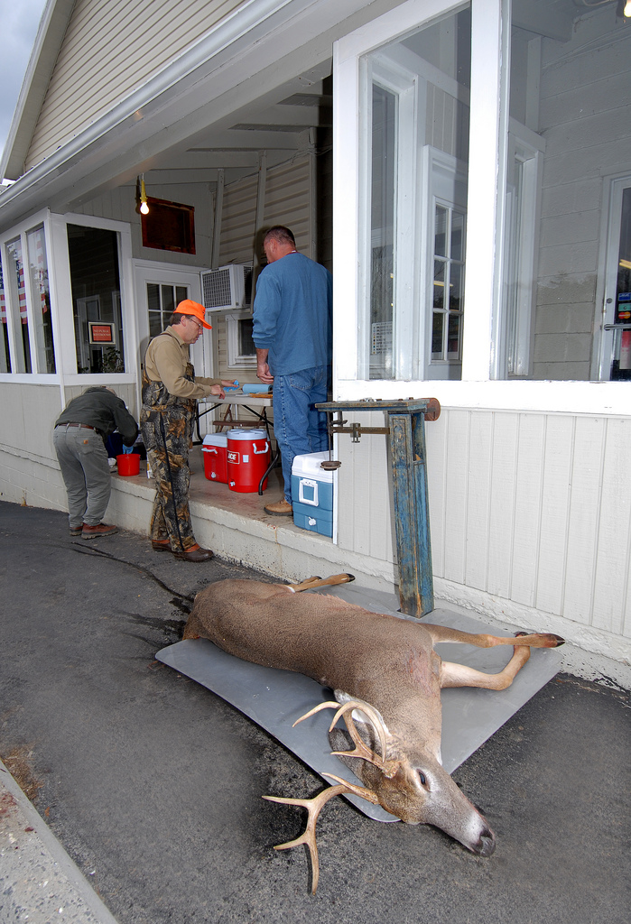 Are us hunters an endangered species all about america for Hunt fish va