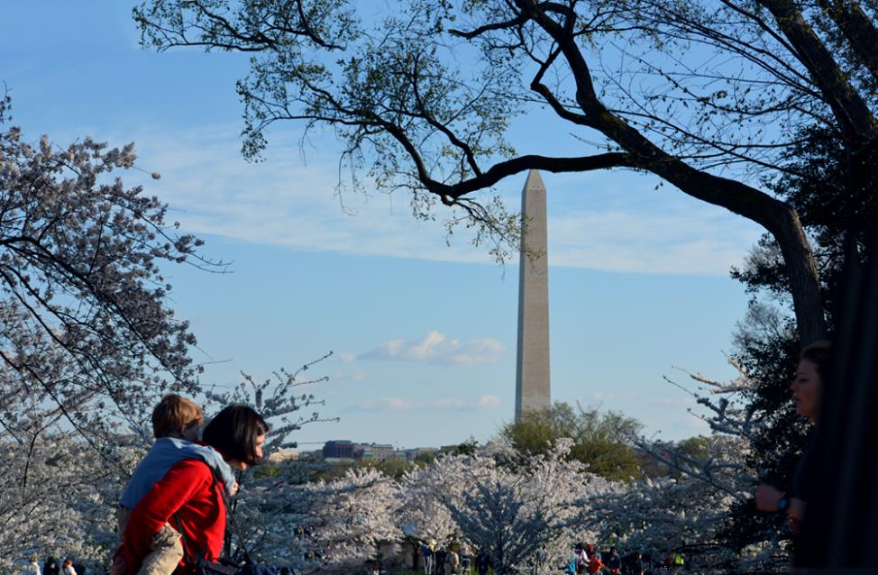 Visitors enjoy the cherry blossoms in Washington, D.C. (Diaa Bekheet/VOA)