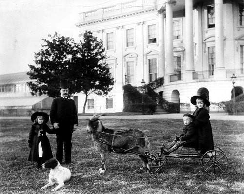Benjamin Harrison, who was president from 1889 to 1893, had a pet goat that would pull his grandchildren around in a cart. (Library of Congress)