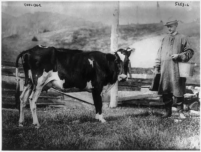 President Calvin Coolidge, who was president from 1923 to 1929, prepares to milk his pet cow in this undated photo. (Library of Congress)