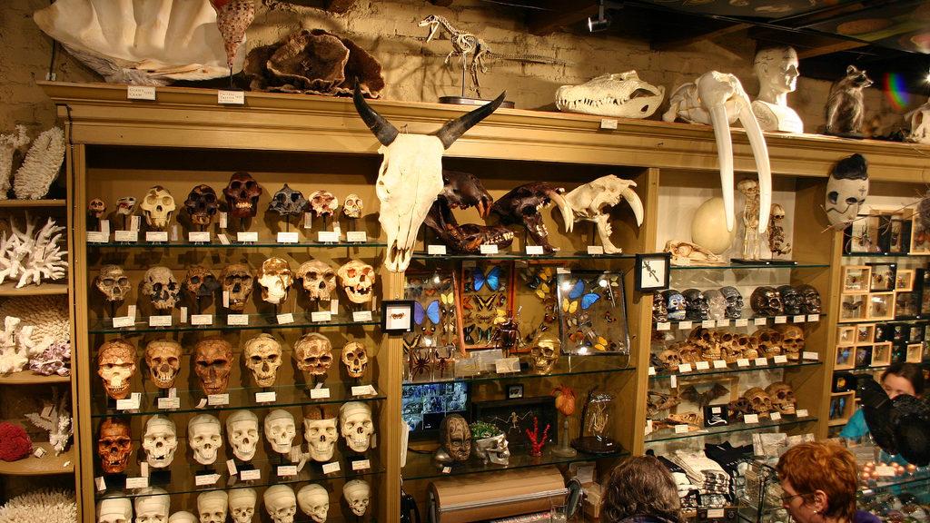Evolution Store