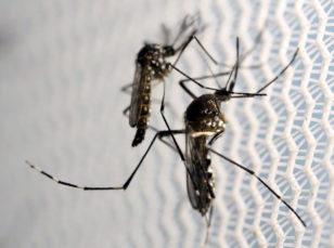 Aedes aegypti ağcaqanadlarının artımına münbit şərait yaradan əsas amil rütubət, gölməçələr, və üstü qapadılmamış su qablarıdır. Bu ağcaqanadlar malyariya və sarı qızdırmadan əlavə, son bir neçə ildə təhlükəli Zika virusunun daşıyıcılarına çevriliblər.
