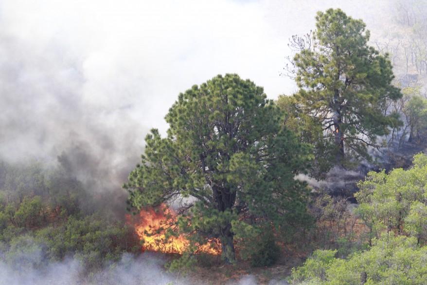"""U.S. Western Wildfires"""