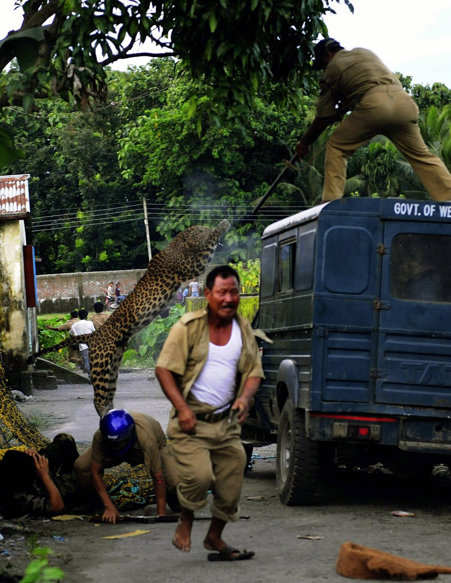 """India Wildlife Leopard"""