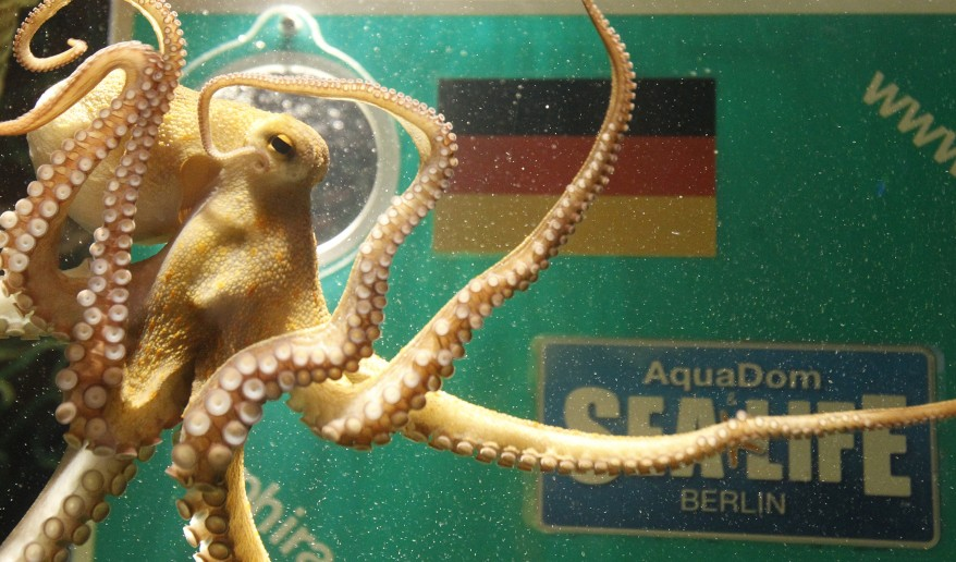 """Germany Octopus Ophira"""