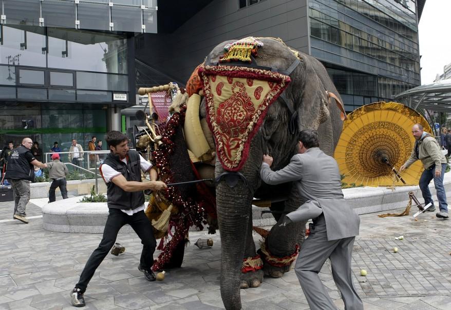 """""""Hungary Elephant"""""""