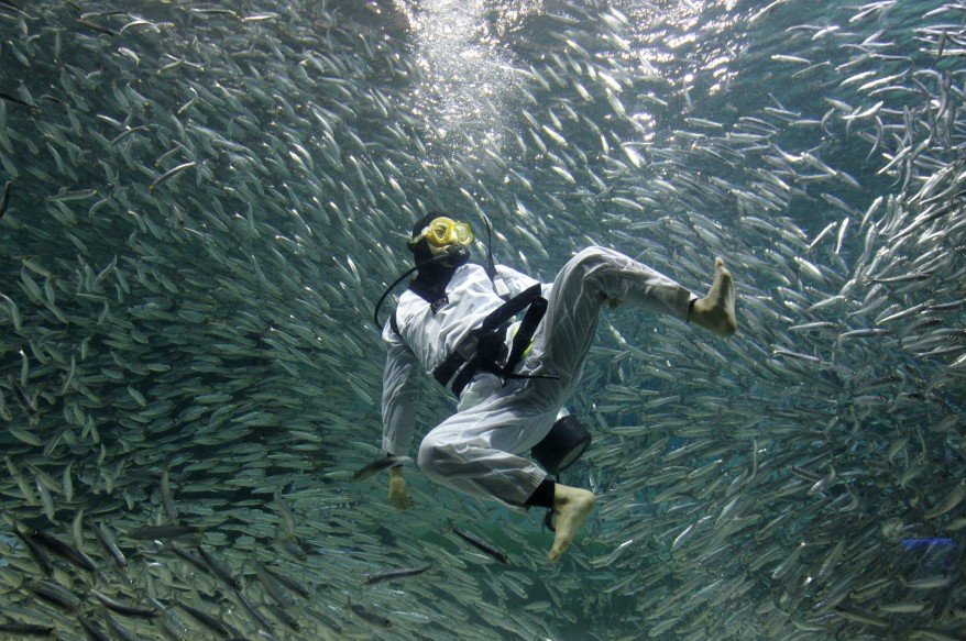 """South Korea Diver Sardines"""