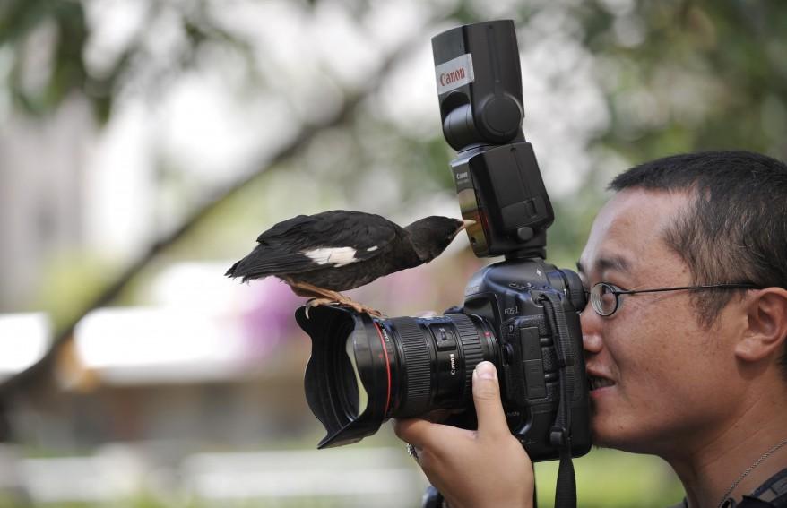 """""""China Bird"""""""