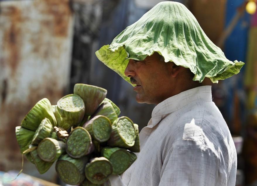 """""""India Lotus Vendor"""""""
