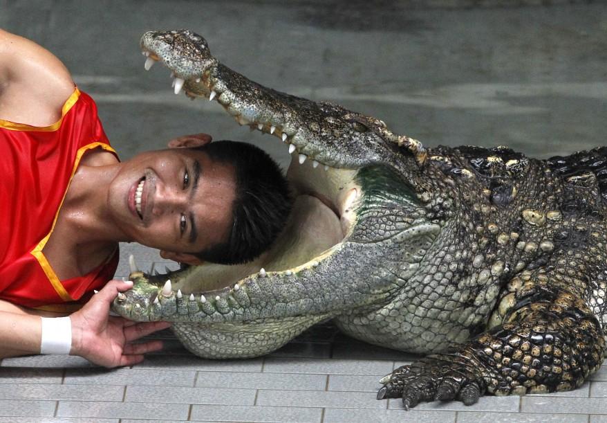 """Thailand Crocodile"""