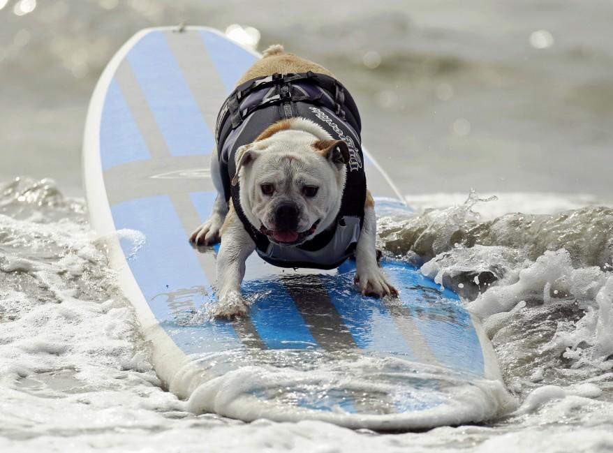 US Dog surfing