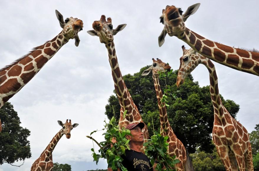 """""""Philippines Wildlife"""""""