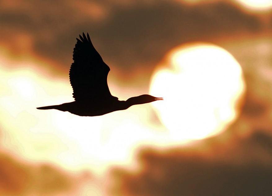 Nepal Bird