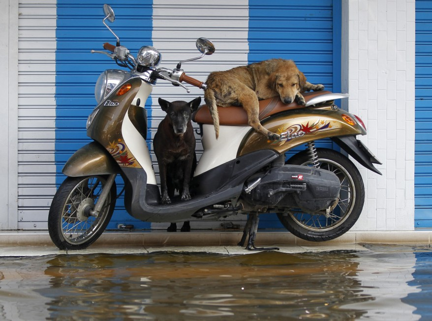 """Thailand Dogs"""