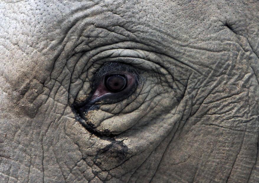 Georgia_Elephant