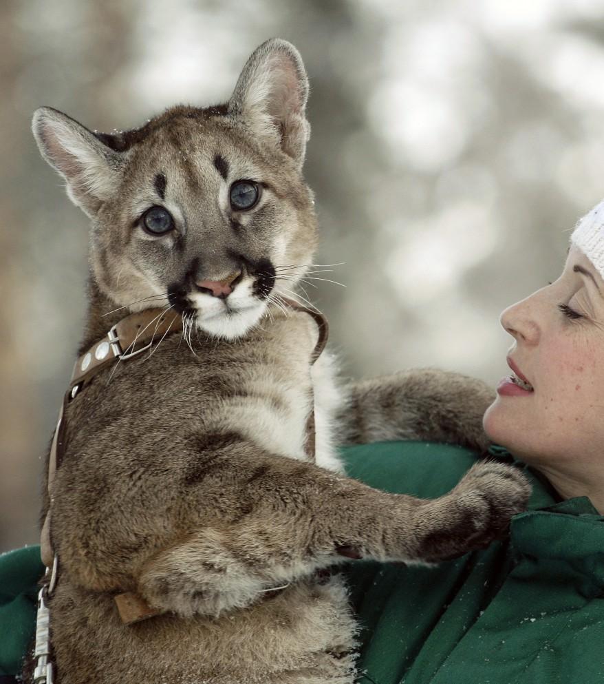 Russia Puma