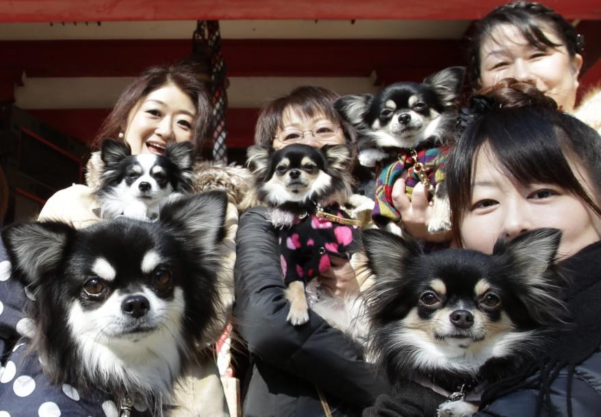 """""""Japan New Year Pets"""""""