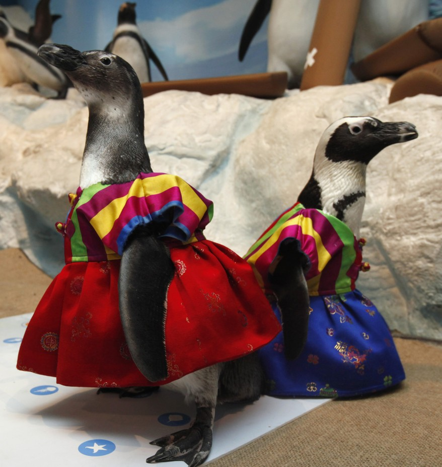 """South Korea Penguins"""