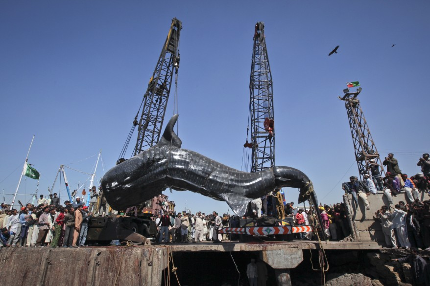"""""""Pakistan Whale Shark"""""""