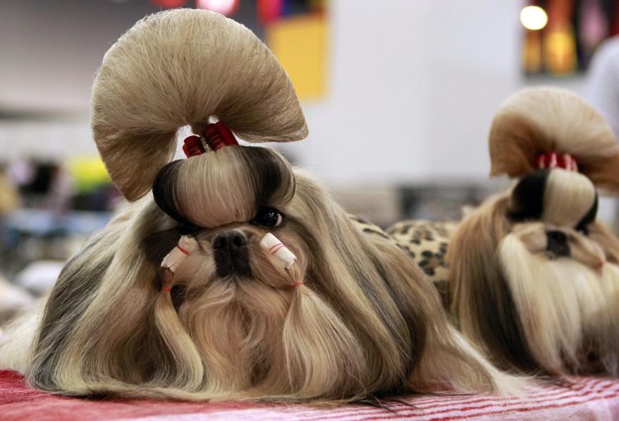 """Philippines Dog Show"""