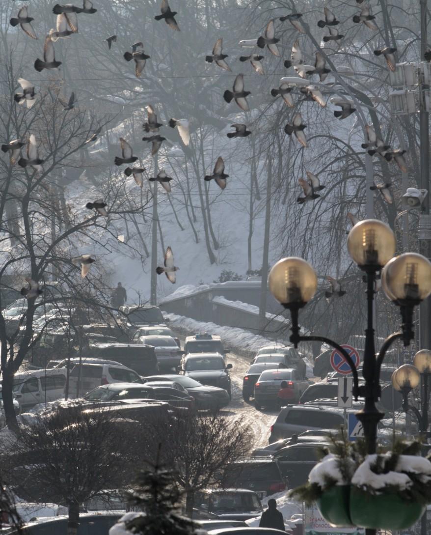 """Ukraine Pigeons"""