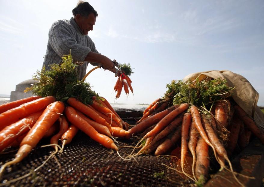 Albania Farmers Economy