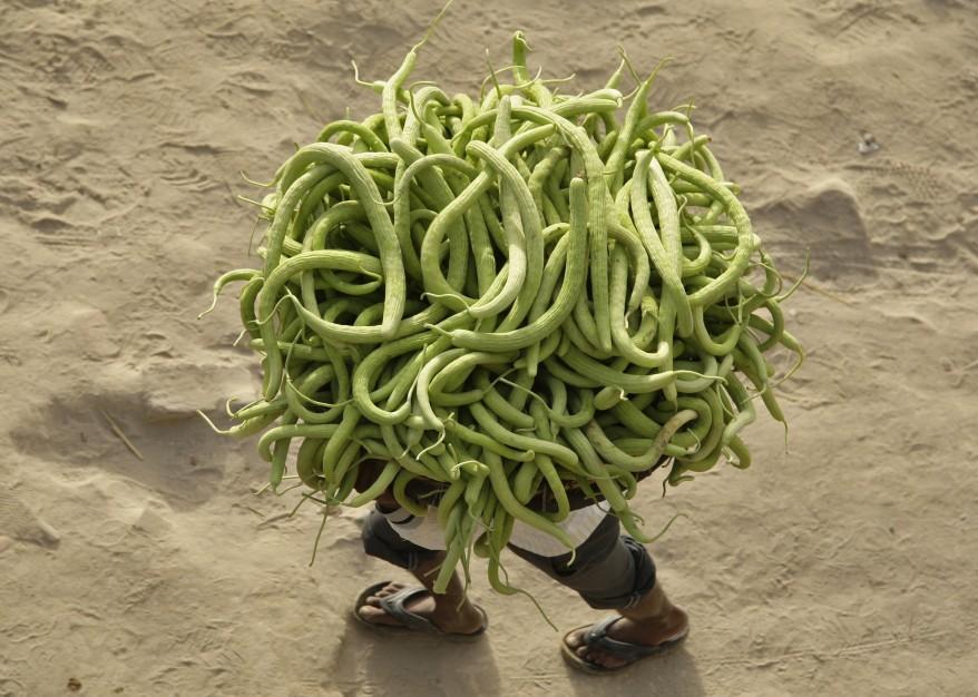 """India Cucumbers)"