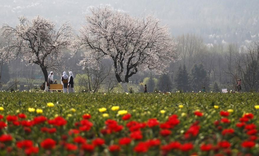 """""""India Tulip Garden"""""""