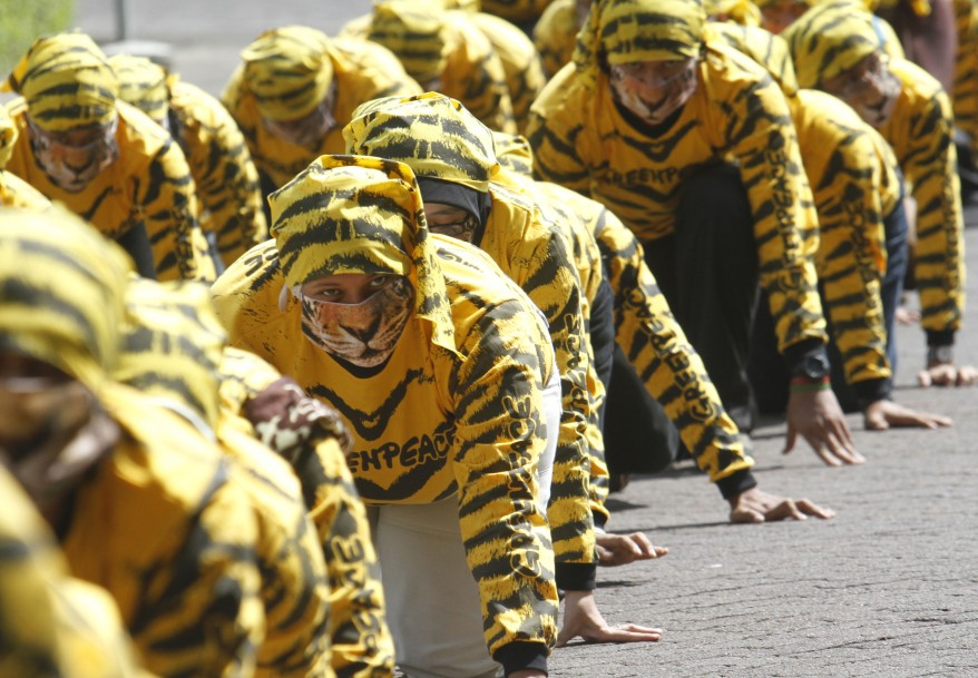 """Indonesia Tiger Protest"""