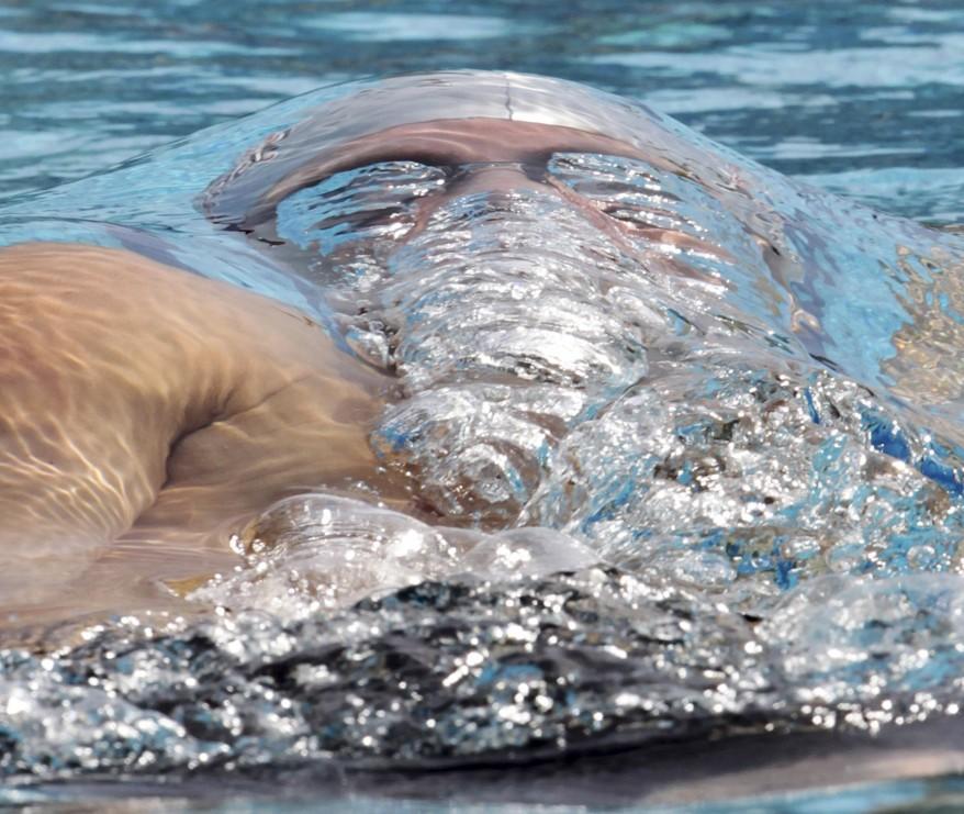 """Brazil Swimming"""