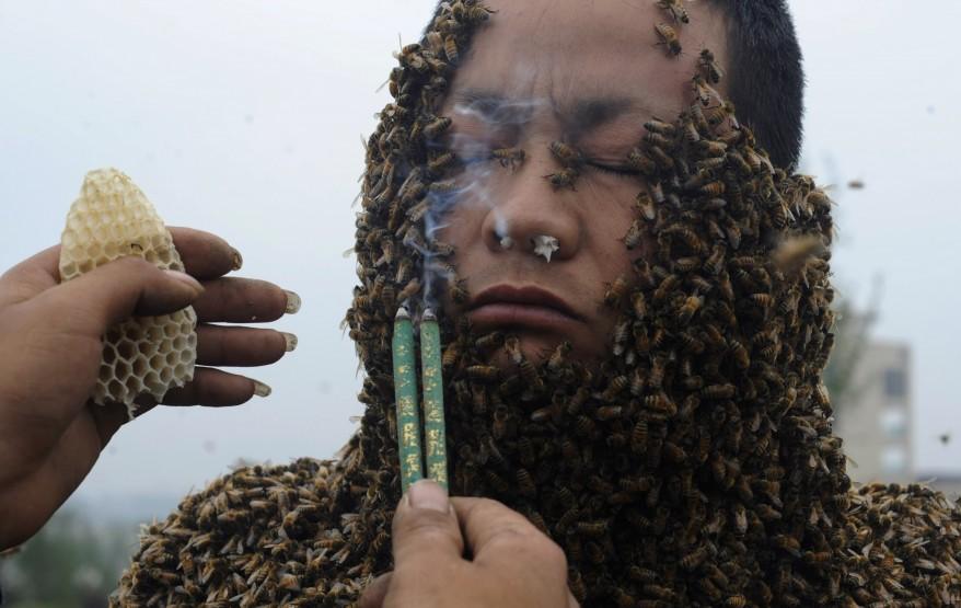 """""""China Bees"""""""