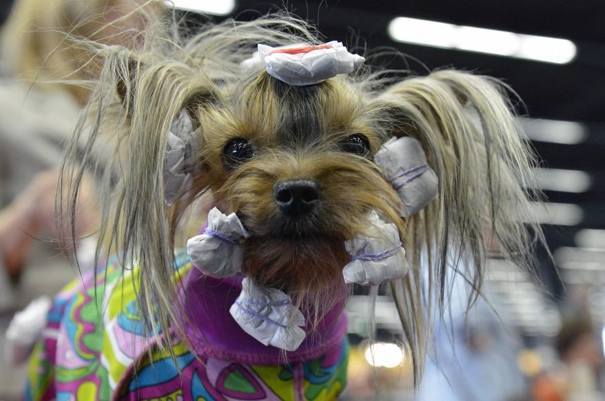 Austria Dog Show
