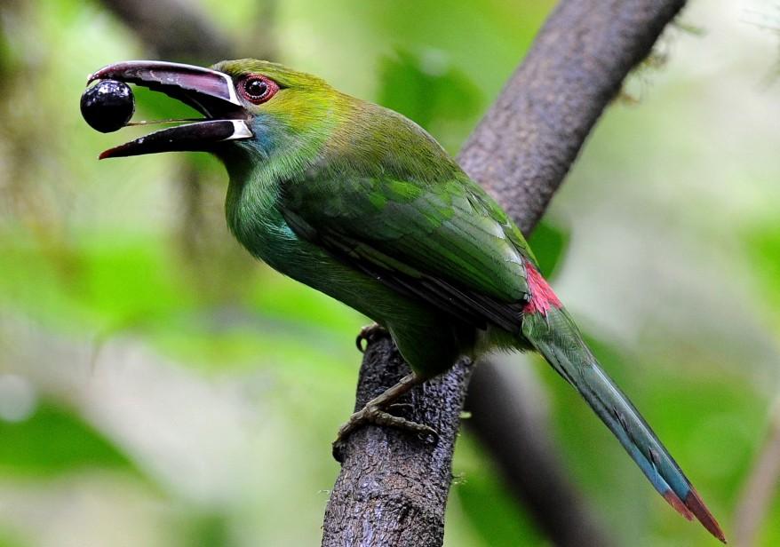 """""""Ecuador Birds"""""""