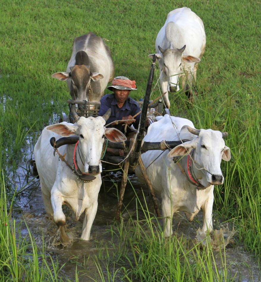 """""""Cambodia Daily Life"""""""