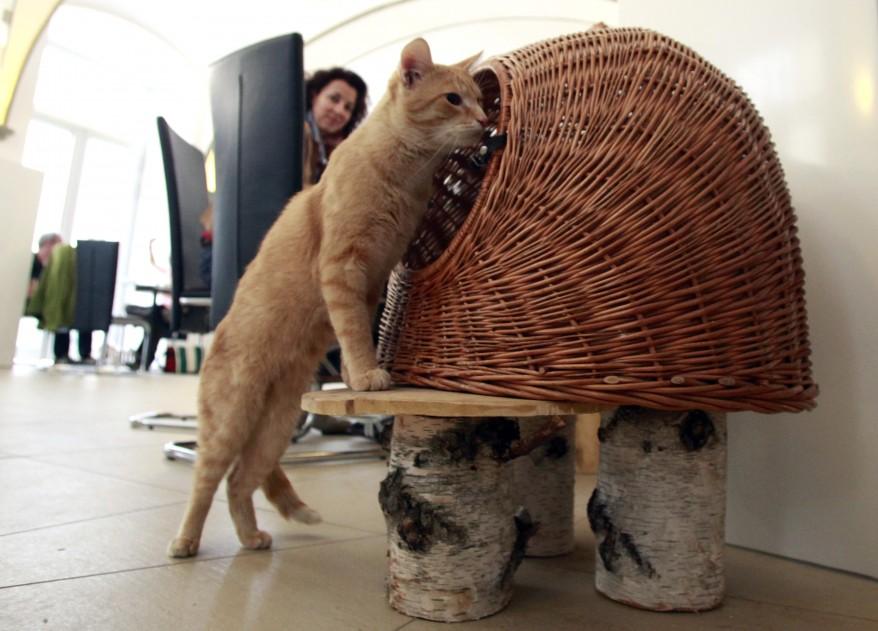 """Austria Cat Cafe"""