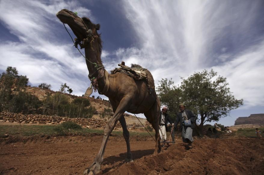 """""""Yemen Agriculture"""""""
