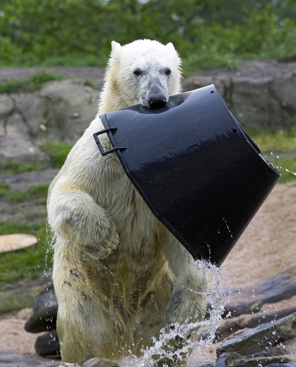 Netherlands Bear