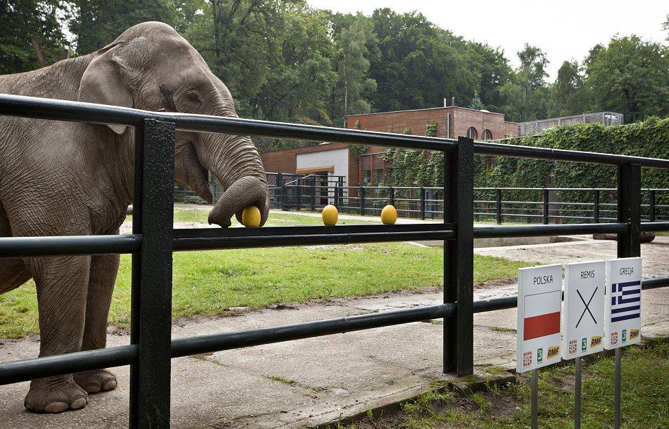 Euro 2012 Elephant