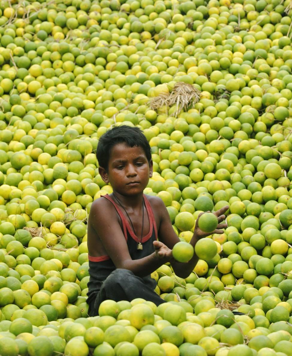 India Lemon