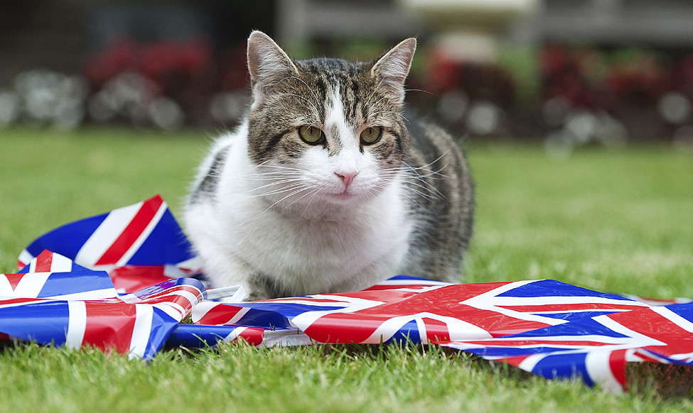 Larry Downing Street Cat
