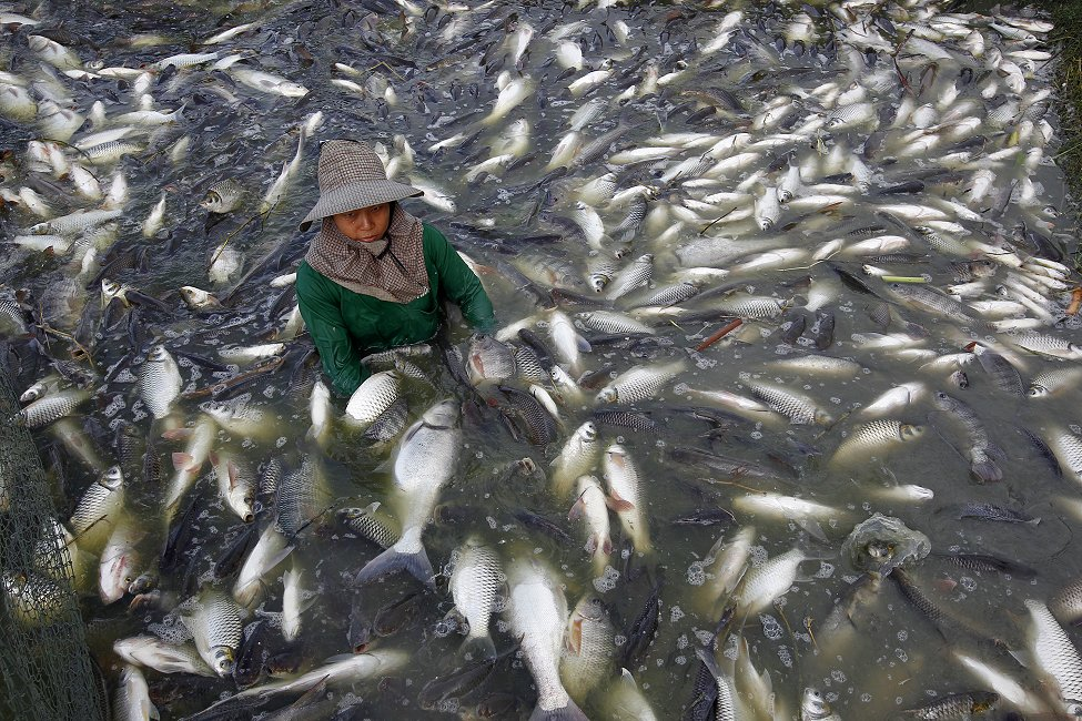Thai Tilapia Fish Farm
