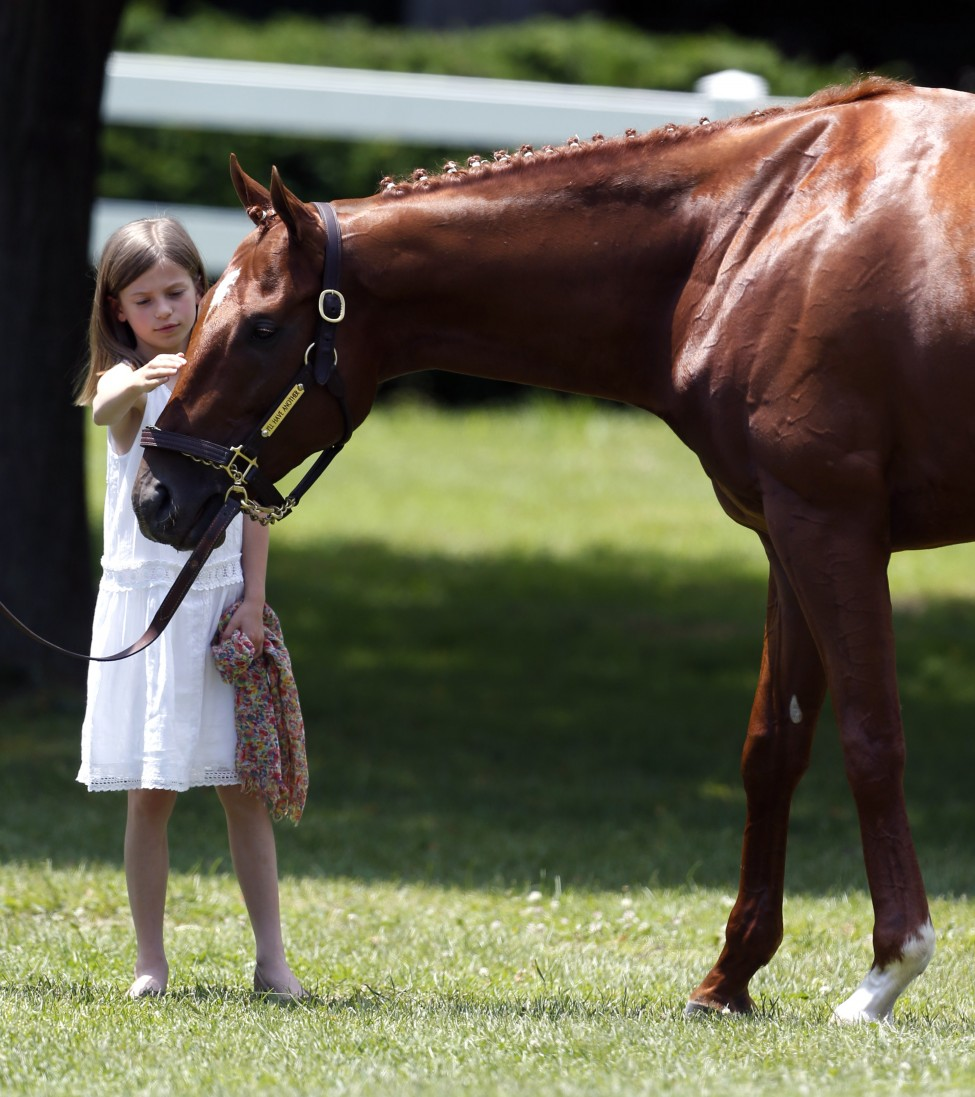 Eliza McCalmont pets Kentucky Derby and Preakness winner I'll Have Another during a news conference at Belmont Park in Elmont, NY, June 8, 2012. (AP)