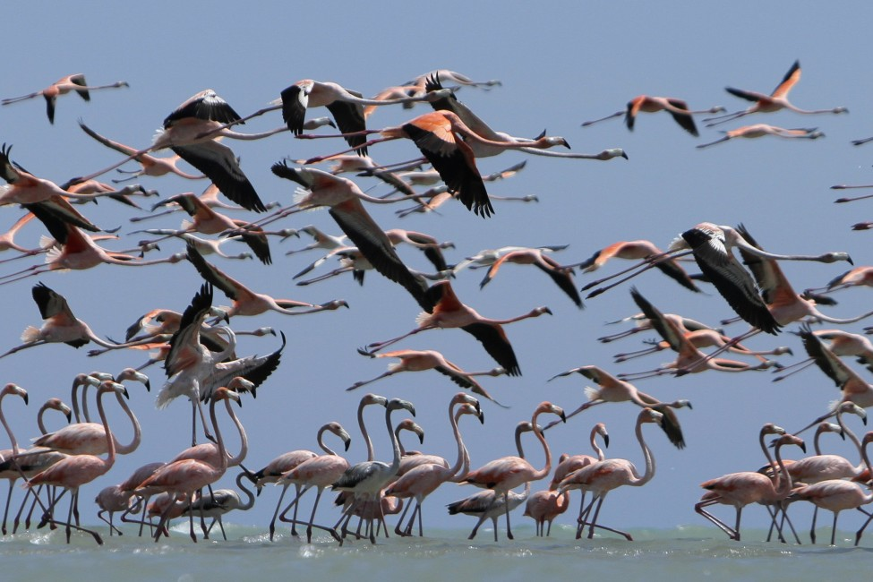 Colombia Flamingos