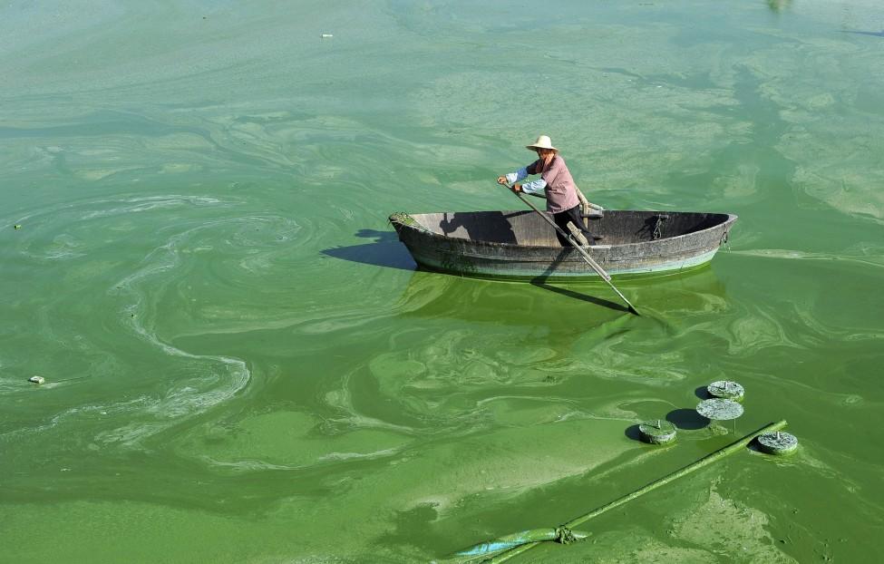 中国安徽巢湖绿藻成灾