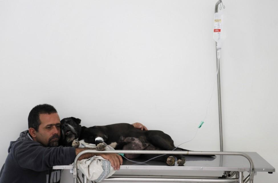 Brazil Animal Hospital