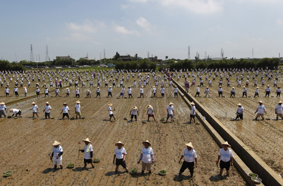 Taiwan Farmers Guinness Record
