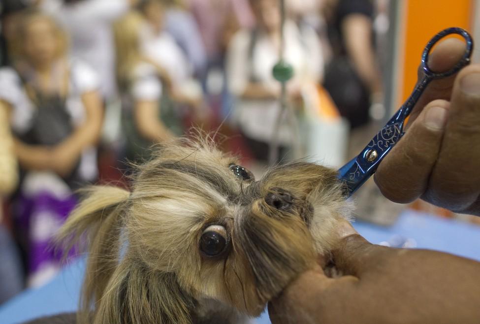 Brazil Pet Fair