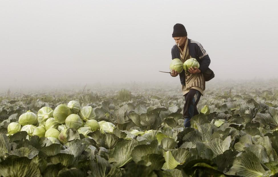 Belarus Agriculture