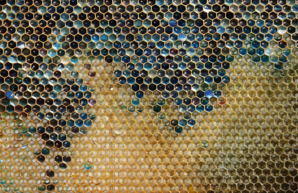 France Honeycomb